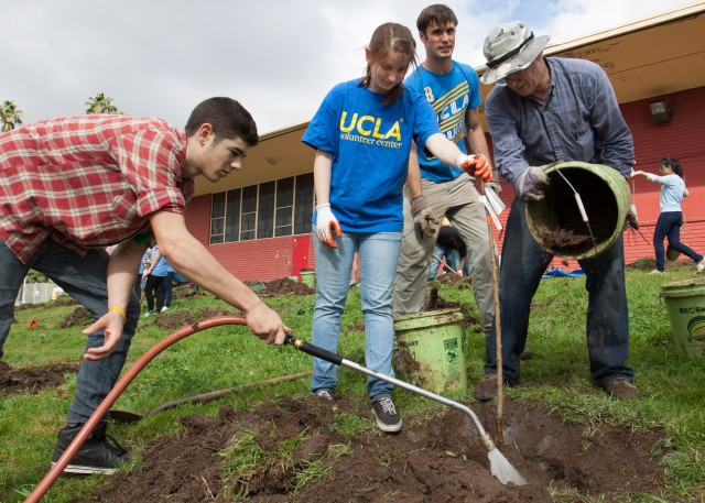UCLA students work with other Treepeople volunteers to prepare the ground for planting.
