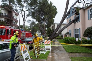 A tree fell through an apartment unit on Kelton Avenue early Friday afternoon. (Jintak Han/Assistant Photo editor)