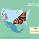 Monarch Butterfly Population Suffers Major Decline Seasonal Count Reveals Daily Bruin