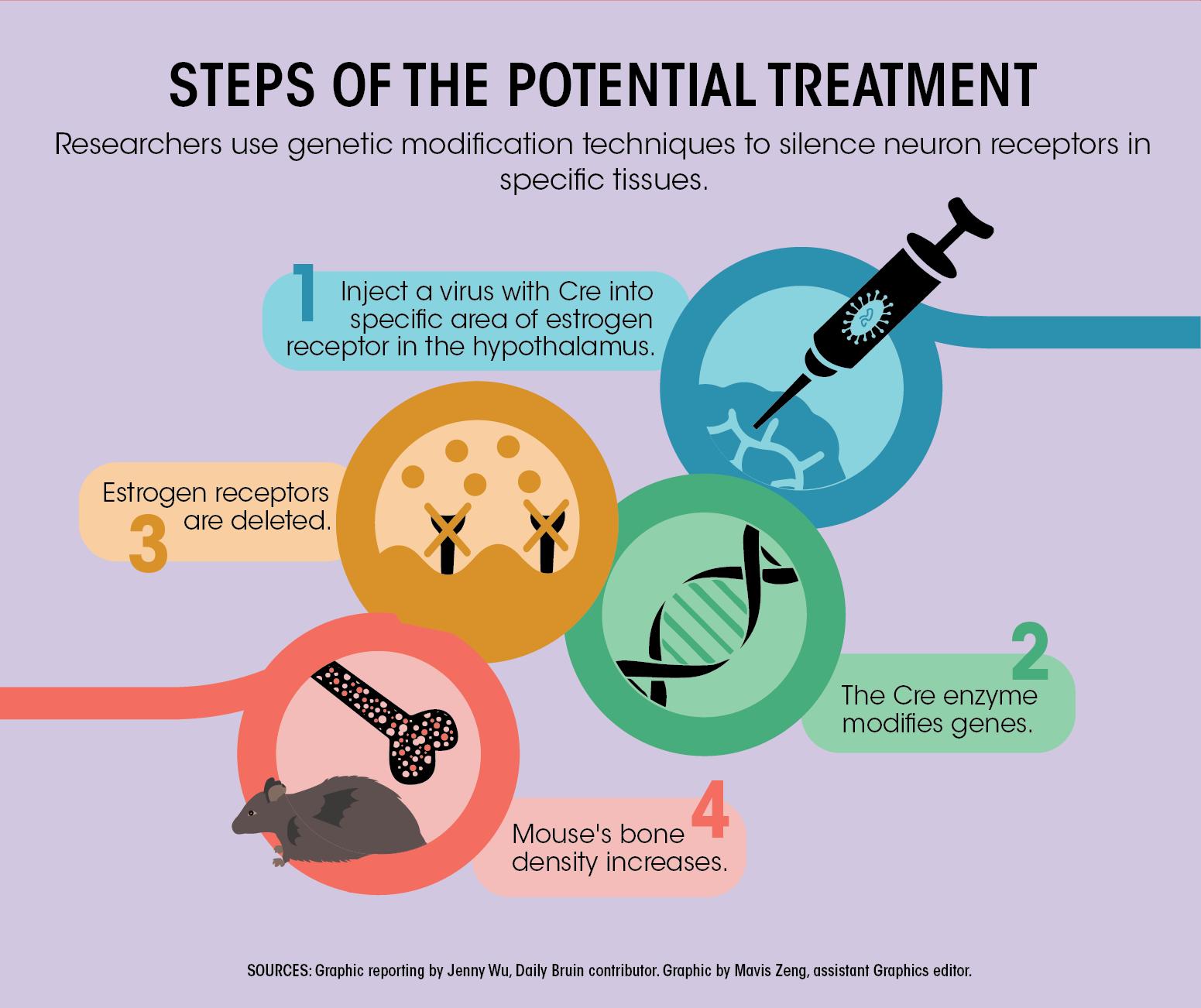 37+ How does estrogen affect osteoporosis ideas in 2021