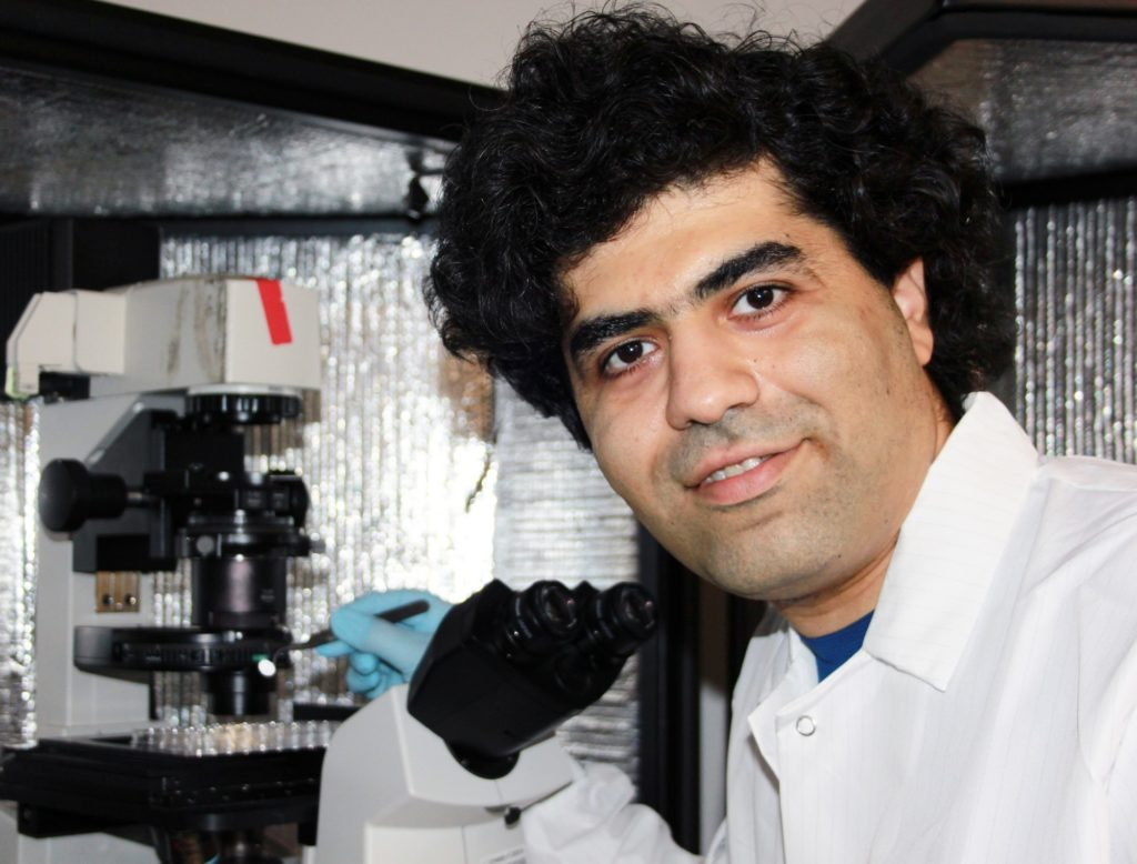 Mahdi Hasani, the co-investigator of the project, works on developing biomaterials for the training of T cells to fight the COVID-19 virus. (Courtesy of Mahdi Hasani & Song Li)