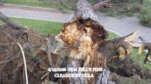 Gym Hills Pinus brita